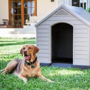 Caseta exterior para perros, cosas a tener en cuenta